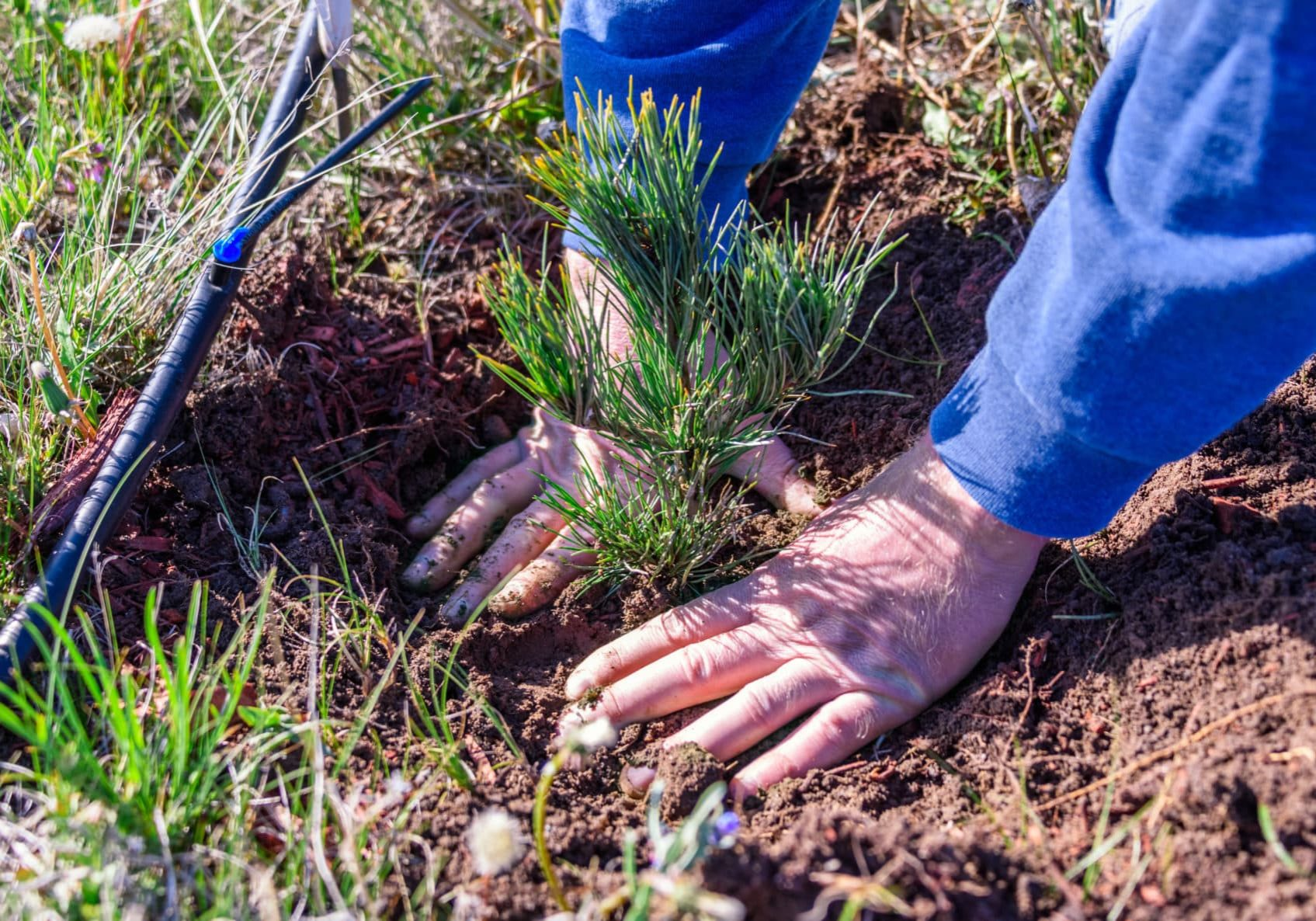 Pikes Peak Care and Planting
